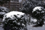 bushes-of-snow