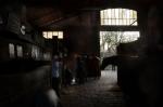 Horses at Vincennes - Des chevaux à Vincennes, mars 2012