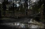 After the rain, Après la pluie, Rambouillet forest, 2012