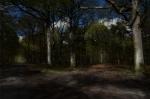 In the forest - Dans la forêt, 2012