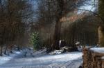 Snowy logs - Les bûches enneigées, Poissy, 2012